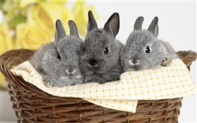 Three gray rabbit HD wallpaper