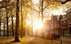 Trees, sunlight, autumn, houses