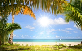 Tropical beach, sunshine, palm trees HD wallpaper