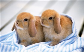 Two rabbit pups HD wallpaper