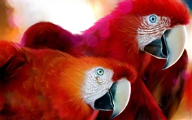 Two red feathers parrot HD wallpaper