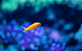Yellow fish, blue water HD wallpaper