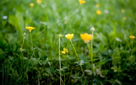 Yellow wildflowers HD wallpaper