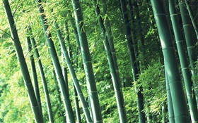 Air fresh bamboo forest HD wallpaper