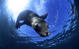 Animal seals close-up HD wallpaper