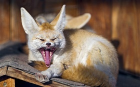 Animals, fox yawns HD wallpaper
