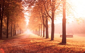 Autumn park, trees, path, yellow leaves HD wallpaper