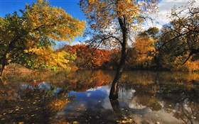 Autumn, pond, trees, water reflection