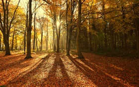 Autumn, red leaves, morning, trees, sun rays HD wallpaper