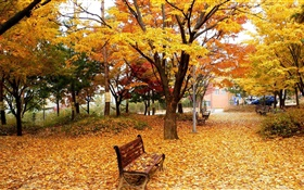 Autumn, trees, leaves, park, bench HD wallpaper