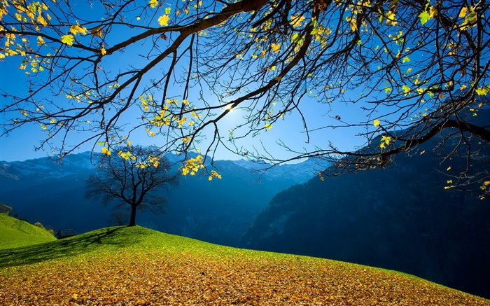 Autumn, trees, mountains, blue sky, sun rays Wallpapers Pictures Photos Images