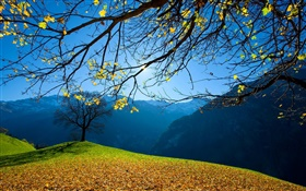 Autumn, trees, mountains, blue sky, sun rays HD wallpaper