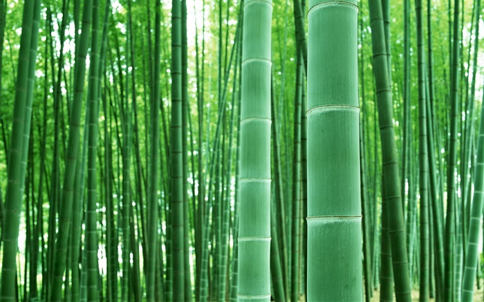 Bamboo forest, branches, green Wallpapers Pictures Photos Images