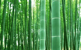 Bamboo forest, branches, green HD wallpaper