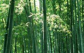 Bamboo forest in summer HD wallpaper