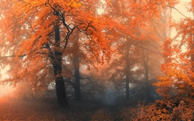 Beautiful autumn, trees, red leaves HD wallpaper