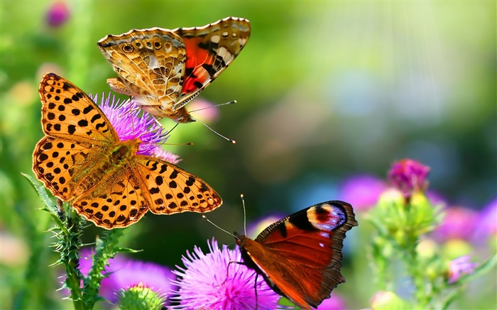 Beautiful butterflies Wallpapers Pictures Photos Images