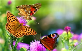 Beautiful butterflies HD wallpaper