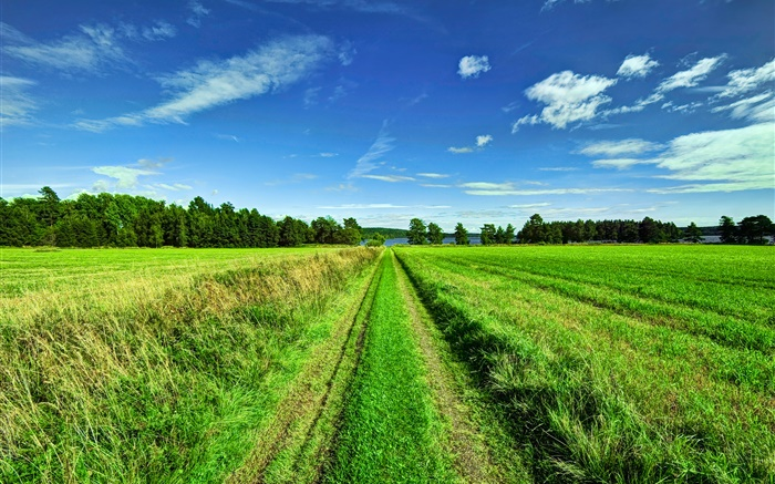 Beautiful nature landscape, fields, trees, road, sky Wallpapers Pictures Photos Images