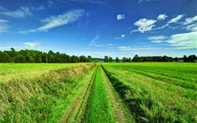 Beautiful nature landscape, fields, trees, road, sky