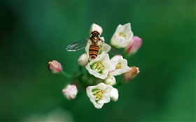 Bee with flowers HD wallpaper