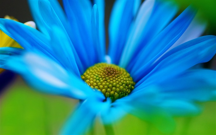 Blue flower petals macro Wallpapers Pictures Photos Images