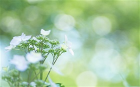 Bokeh, wildflowers HD wallpaper