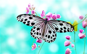 Butterfly and purple flowers HD wallpaper