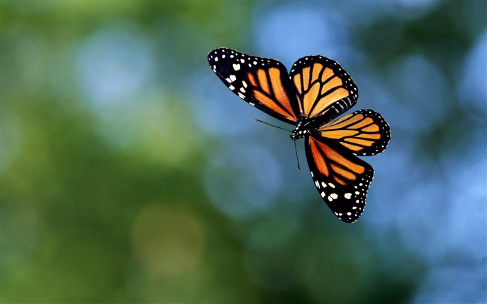 Butterfly flying, bokeh Wallpapers Pictures Photos Images