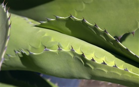 Cactus, thorns close-up HD wallpaper