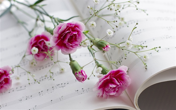 Carnations, pink flowers, book Wallpapers Pictures Photos Images