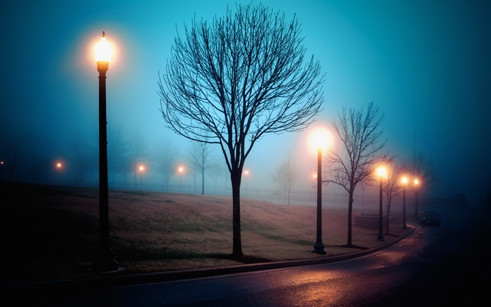 City, night, fog, street, park, lights Wallpapers Pictures Photos Images