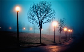 City, night, fog, street, park, lights HD wallpaper
