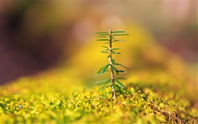 Closeup of small trees, yellow blurred background HD wallpaper