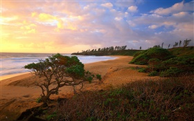 Coast, sea, beach, grass, sands, trees, clouds, sunrise