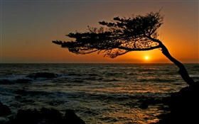 Coastal, a tree, silhouette, sunset HD wallpaper