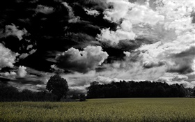 Dark clouds, trees, farmland HD wallpaper