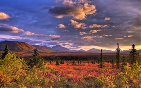 Denali National Park, Alaska, USA, clouds, dusk, grass HD wallpaper