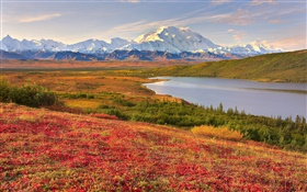Denali National Park, Alaska, USA, grass, lake, mountains HD wallpaper