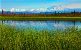 Denali National Park, Alaska, USA, lake, grass, trees HD wallpaper