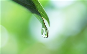 Dew, leaf, bokeh HD wallpaper