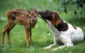 Dog with deer HD wallpaper