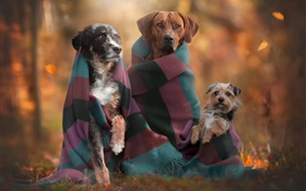 Dogs family, autumn HD wallpaper
