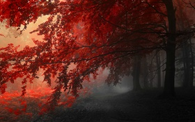 Dusk, autumn, forest, red leaves HD wallpaper