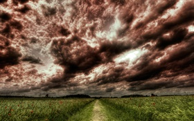 Dusk, clouds, path, fields HD wallpaper