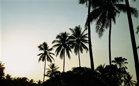Dusk, evening, palm trees, silhouette HD wallpaper