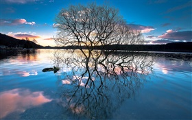 Dusk, trees in the lake, water reflection, sunset HD wallpaper