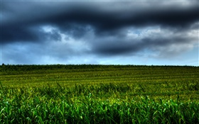 Farmland scenery, clouds, dusk HD wallpaper