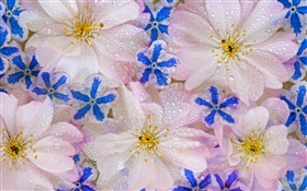 Flowers background, water drops HD wallpaper