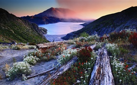 Flowers, slope, volcanic lake, trees, mountains, dawn, fog HD wallpaper